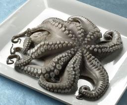 Octopus, heel