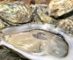 mand (12st) franse oester de normandie nr 3