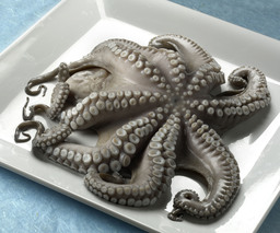 Octopus heel