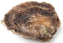 mand (12st) platte zeeuwse oesters 4/0
